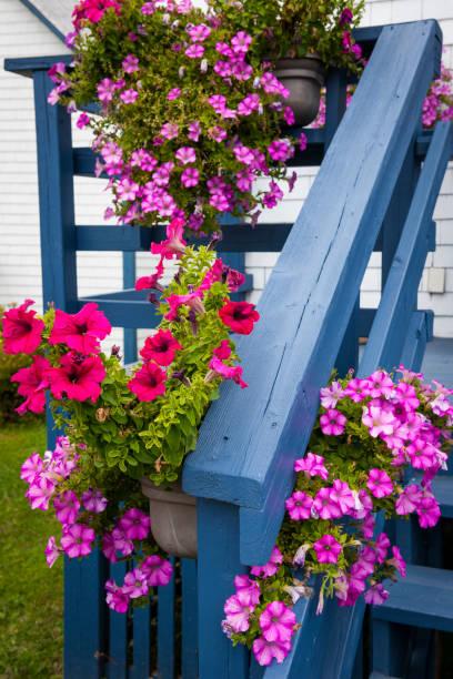 Petunien auf blauen Veranda – Foto