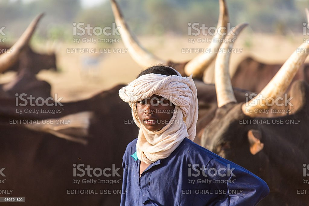 Peul nomads with cattle Sahel Niger stock photo