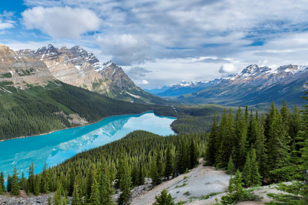 Peyto Lake in Banff National Park, Canada stock photo