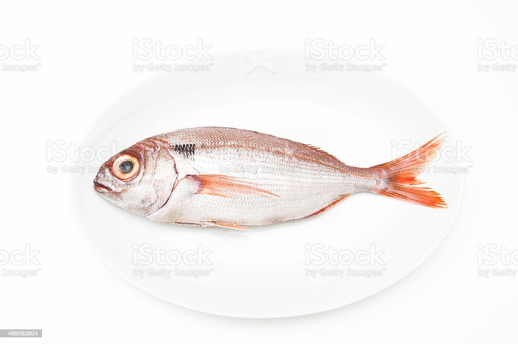 Pezzogna fish, variety of seabream, white background stock photo
