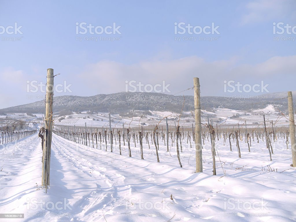 Pfaffstätten, Lower Austria: Vineyard in the winter time stock photo