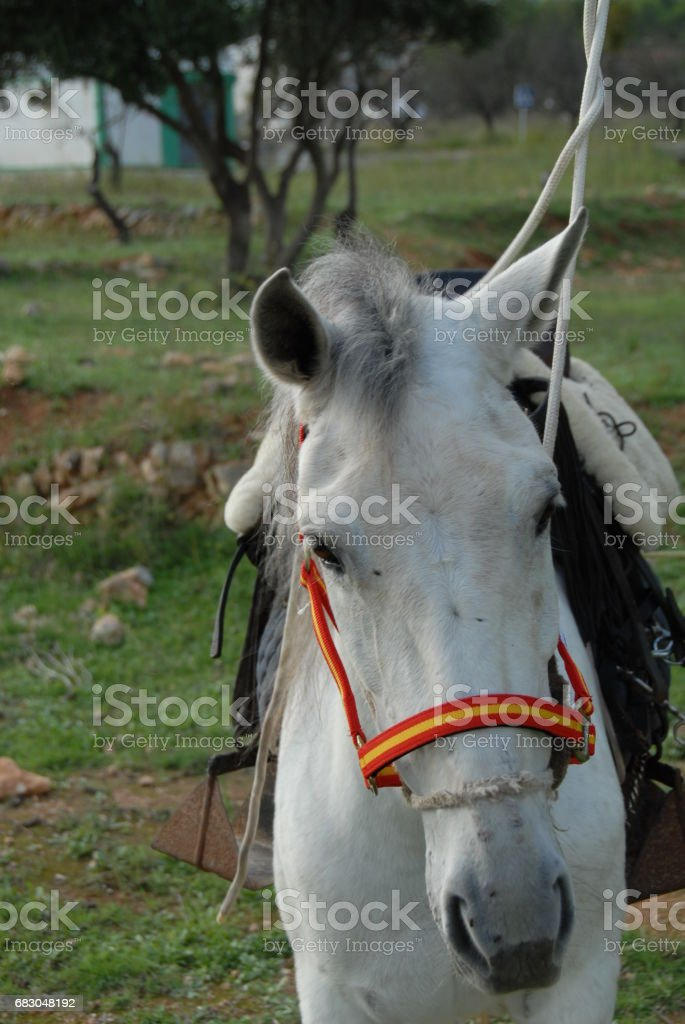 Pferd auf der Weide - Spanien royalty-free stock photo