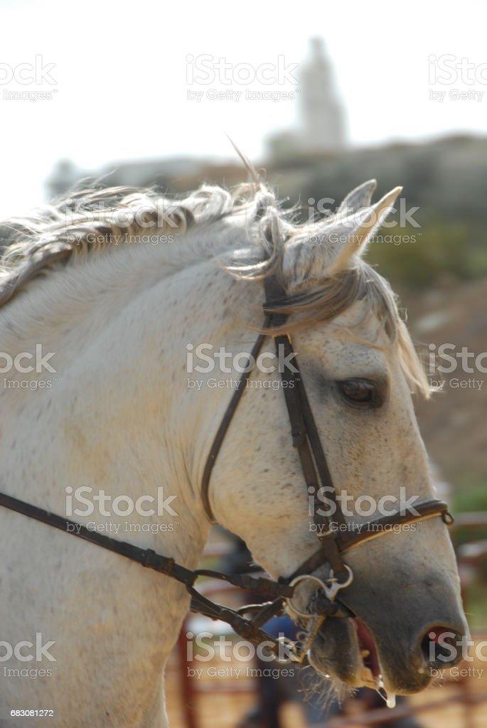 Pferd auf der Weide - Spanien foto de stock royalty-free