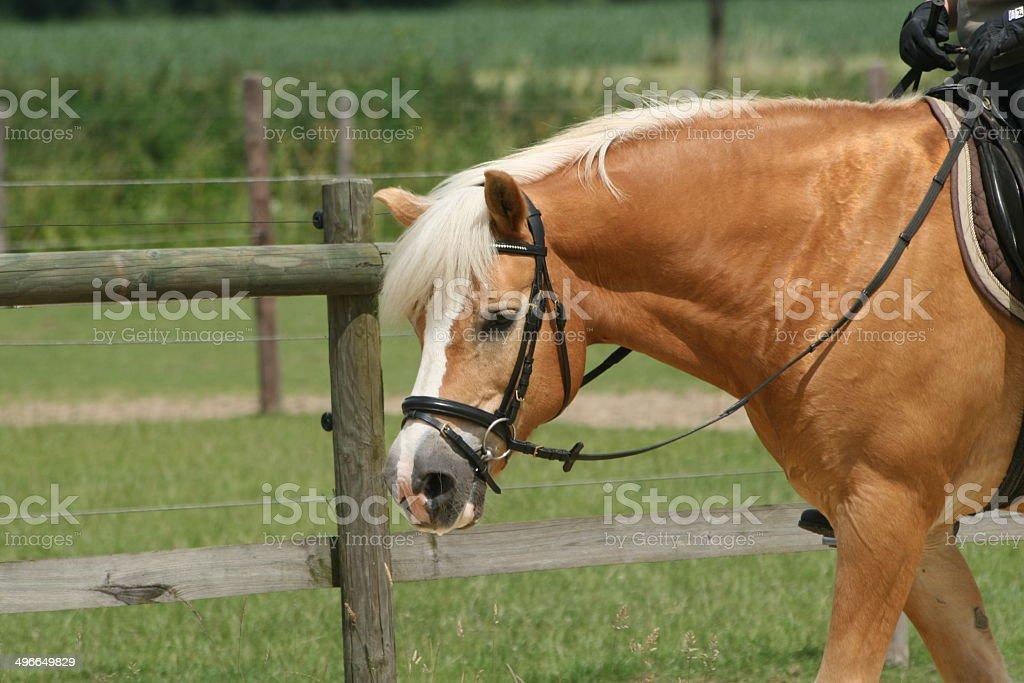 Pferd beim Reiten stock photo