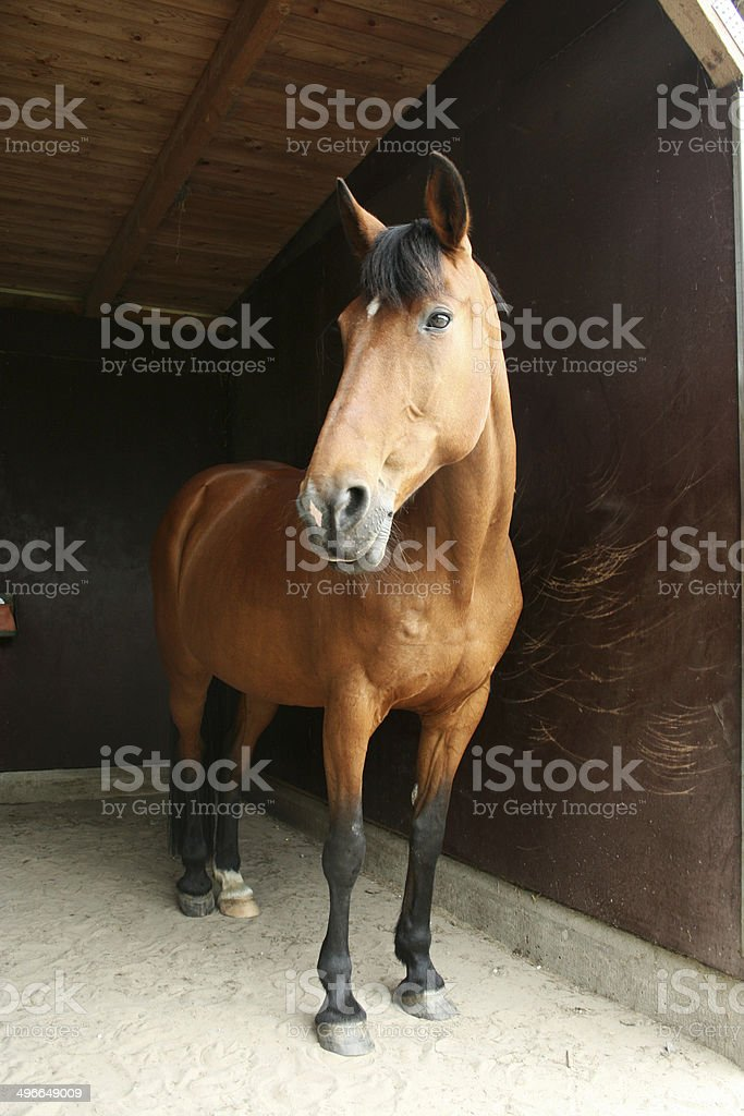Horse bit im Stall – Foto