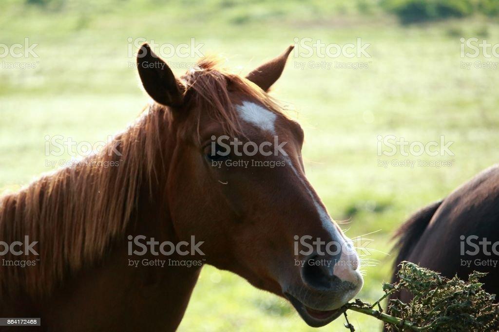 Pferd royalty-free stock photo