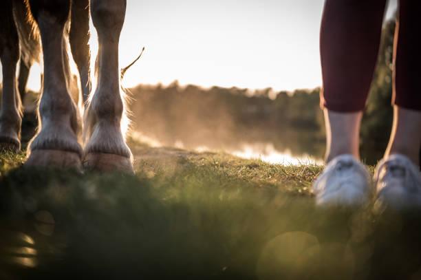 Pferdefüße – Foto