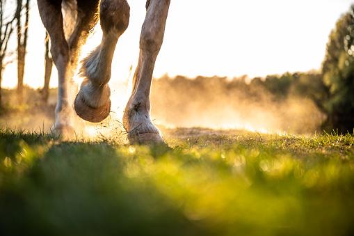 Füße eines Pferdes und des Besitzers