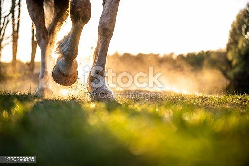 istock Pferdefüße 1220296825