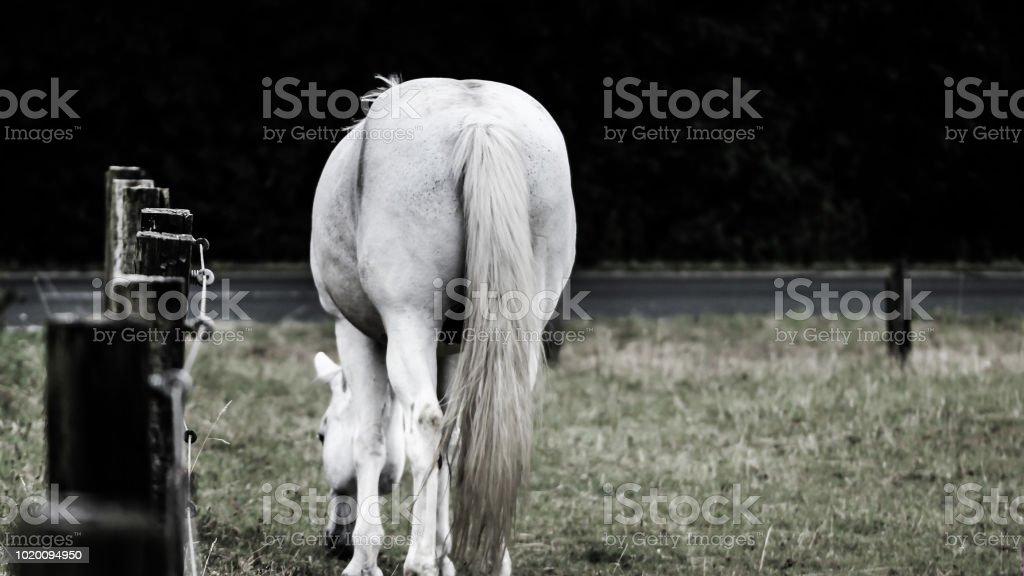 Pferdewiese – Foto