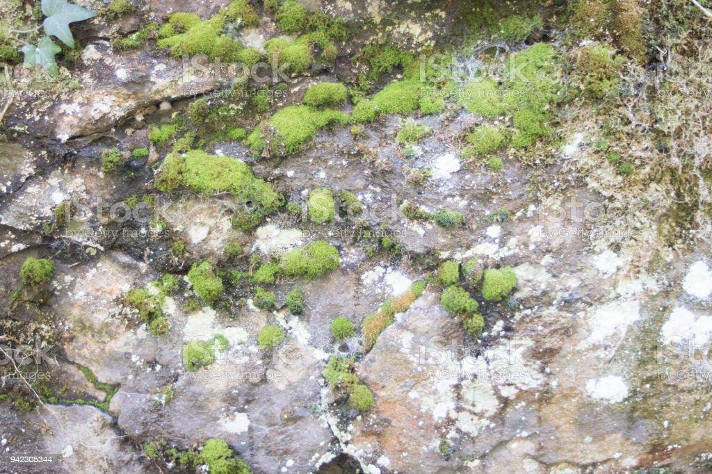 Pflanze und Stein stock photo