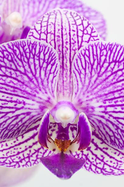 Mother Blumen blühen Makro – Foto