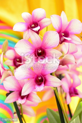 Phalaenopsis orchid plant in the moth orchids family. Flower power style