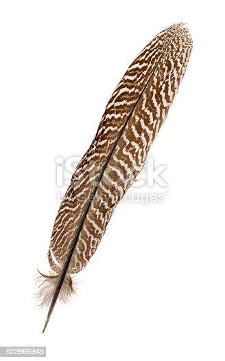 1065862132 istock photo Pheasant feather 523966945