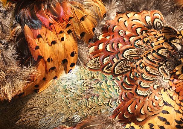 faisan plumes. - faisan gibier à plume photos et images de collection