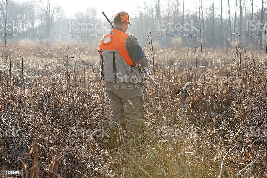 Pheasant hunt with dog stock photo