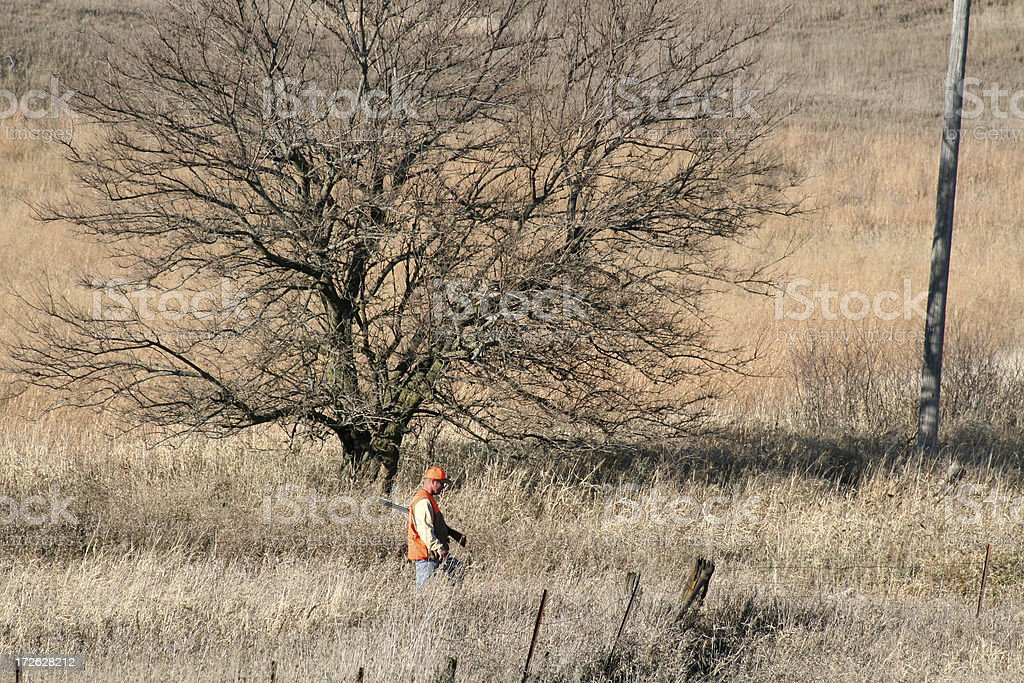 Pheasant Hunting in Tall Grass - Iowa royalty-free stock photo