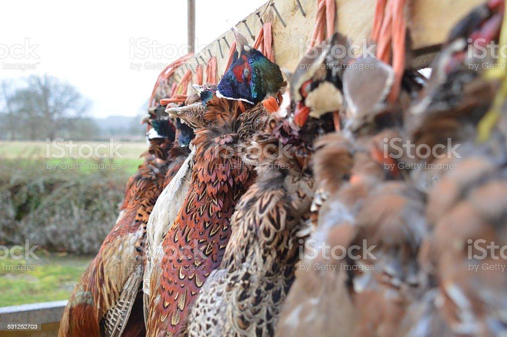 Pheasants and Partridges stock photo