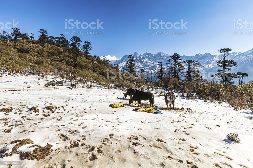 Phedang view point at Kanchenjunga National Park royalty-free stock photo