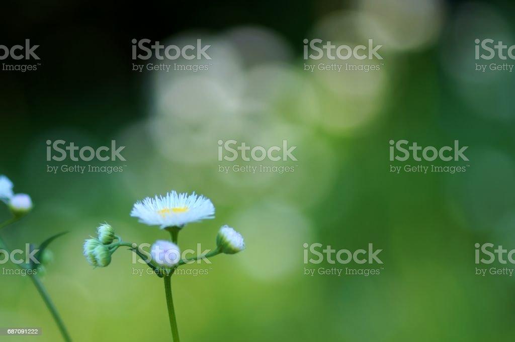 Philadelphia Berufkraut und grün Hintergrund Lizenzfreies stock-foto