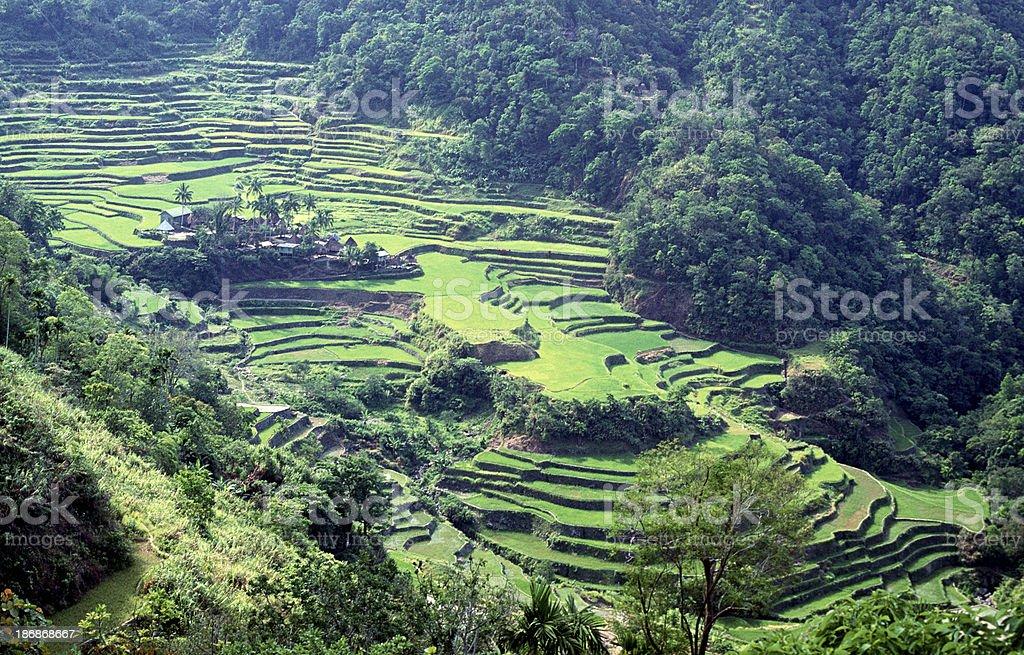 Filipinas Ifugao Banaue Arroz Terrazas Foto De Stock Y Más