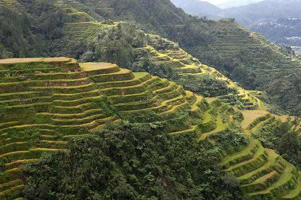 philippines - baguio city stock photos and pictures