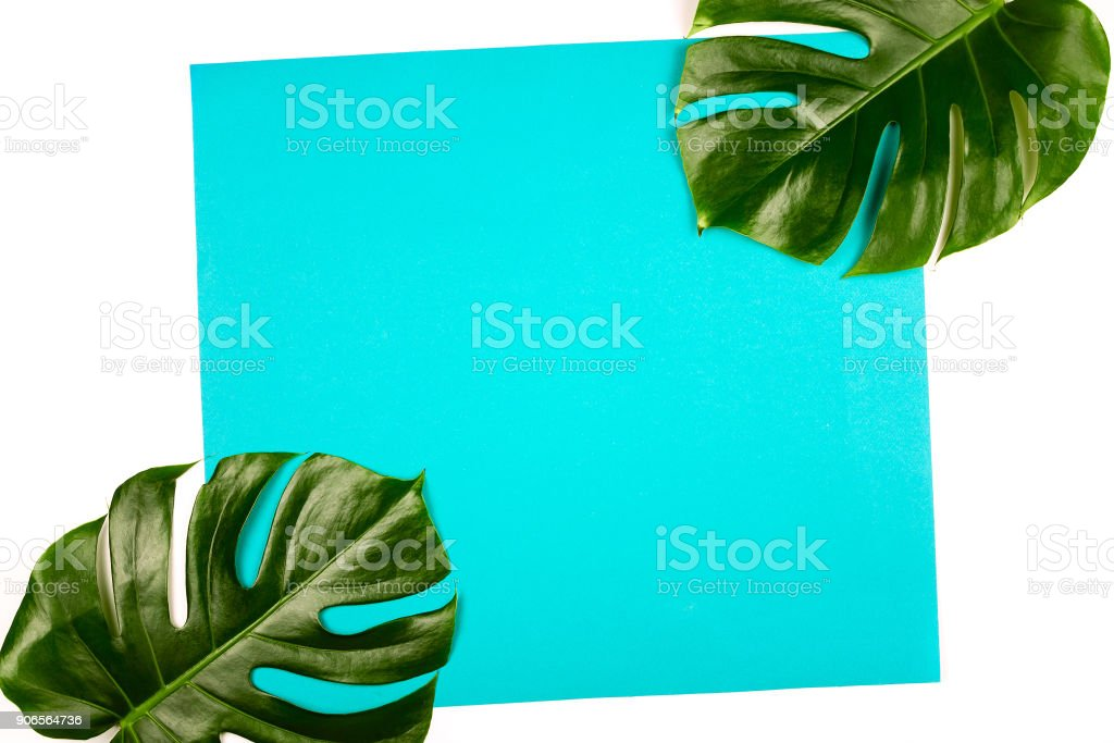 Philodendron monstera leaves on blue and white background. Tropical background, copyspace stock photo