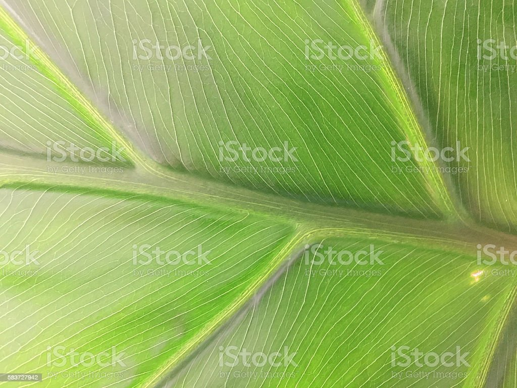 Philodendron (macro composition) stock photo