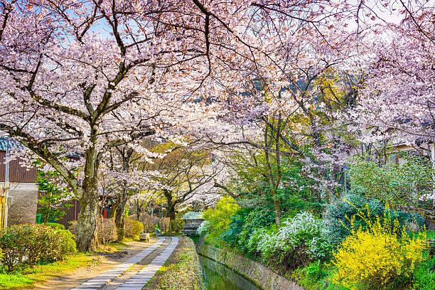 filósofo's way en kyoto - kyoto fotografías e imágenes de stock
