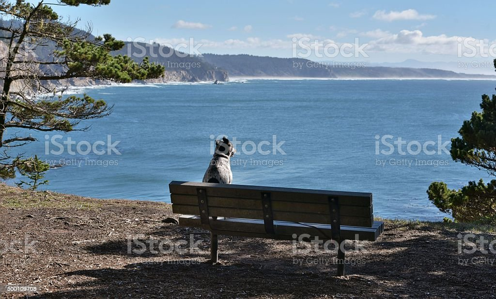 philosophical dog stock photo