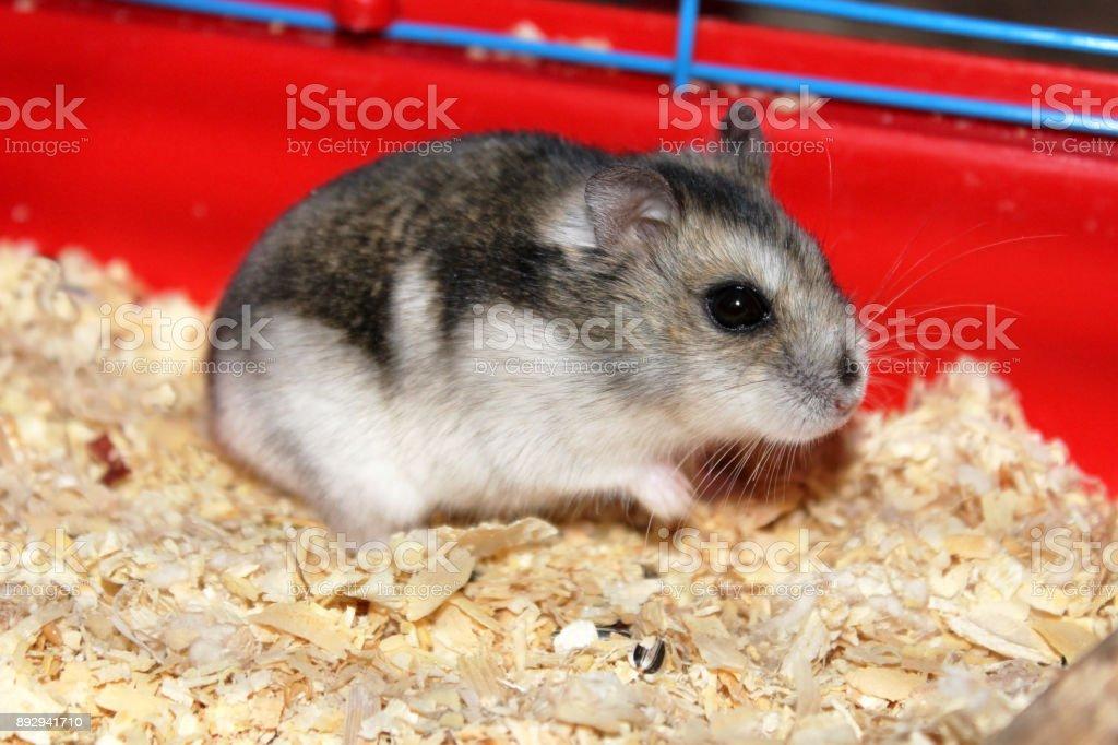 hamster poilu gratuit ébène maison porno sites