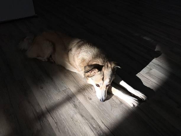 Phoebe Schläft in der Sonne – Foto
