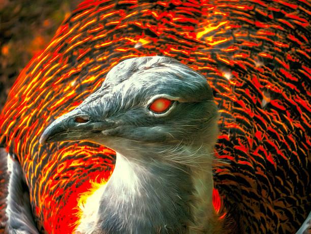 Pájaro de Phoenix en primer plano - foto de stock