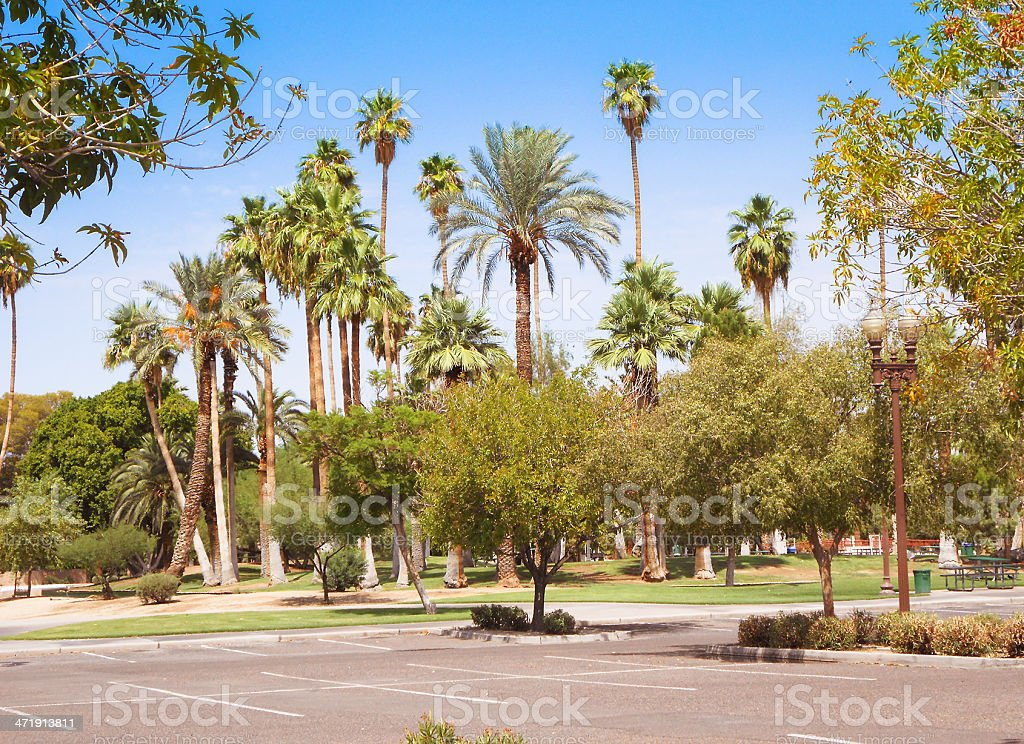 Phoenix park with palm tree royalty-free stock photo