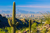 Midtown Phoenix skyline with cacti, mountains, and other desert scenery in the foreground.