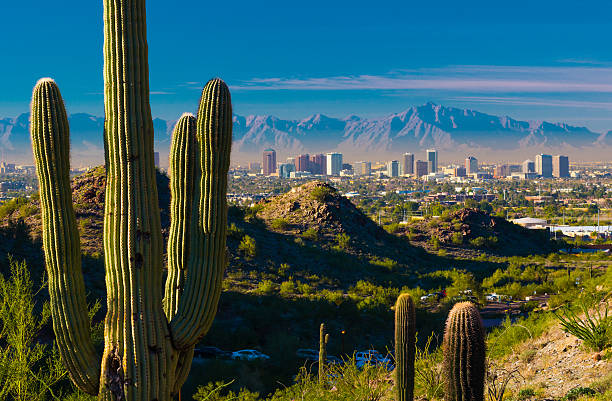 Phoenix skyline and cactuses stock photo
