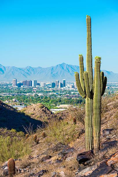 skyline von Phoenix, umgeben von saguaro Kaktus und bergigen desert – Foto