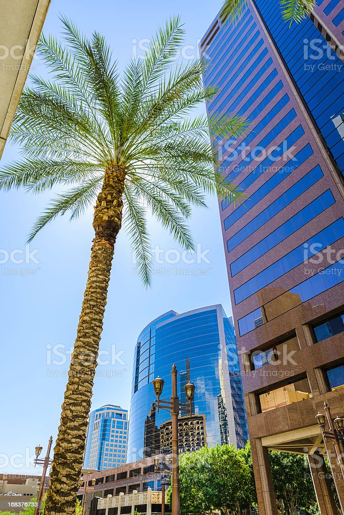 Phoenix skyscraper and palm tree cityscape stock photo