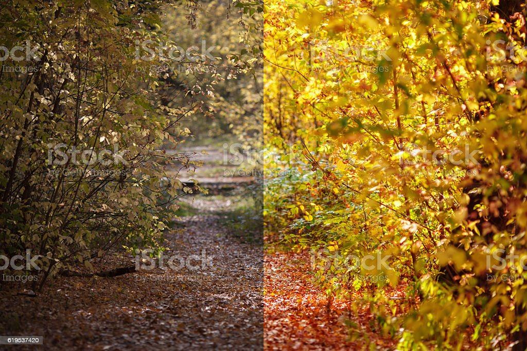 Photo before and after the image editing process. Autumn forest stock photo