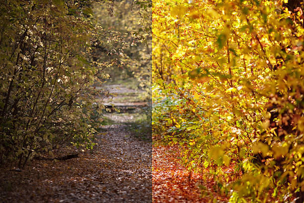 photo before and after the image editing process. autumn forest - retouched image stock photos and pictures
