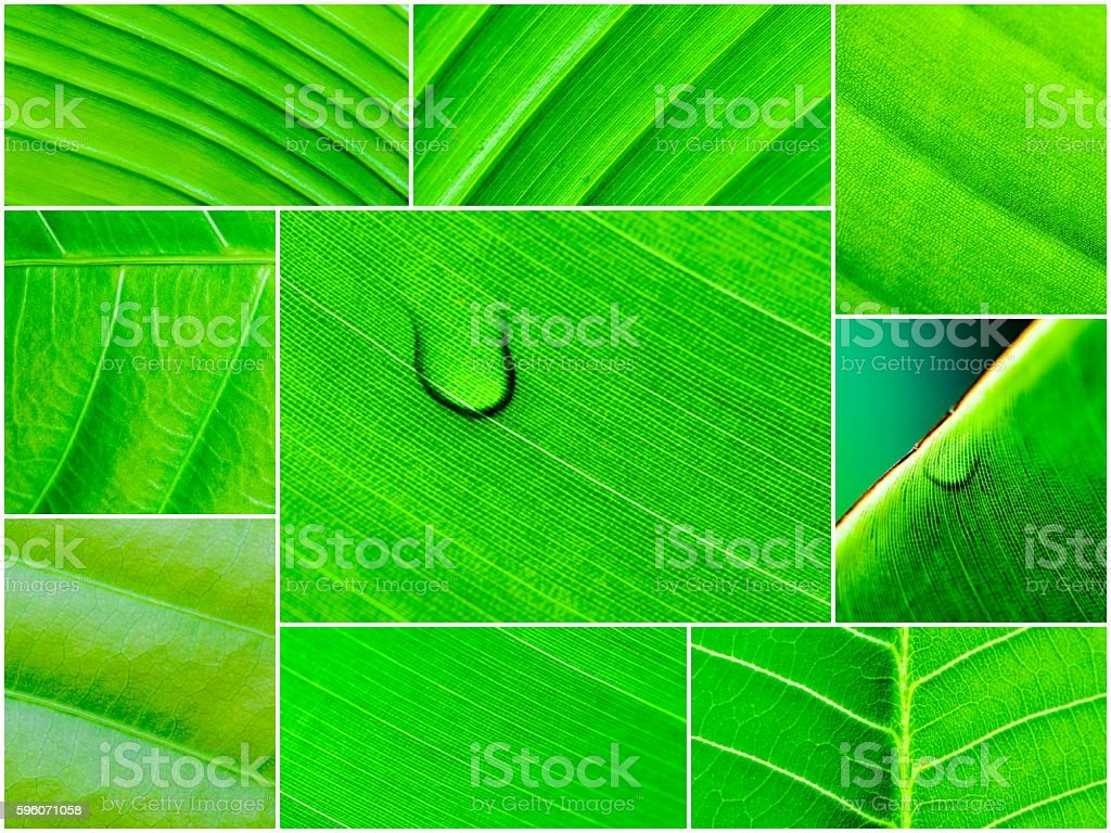 Photo collage of Macro shot of green leaves royalty-free stock photo