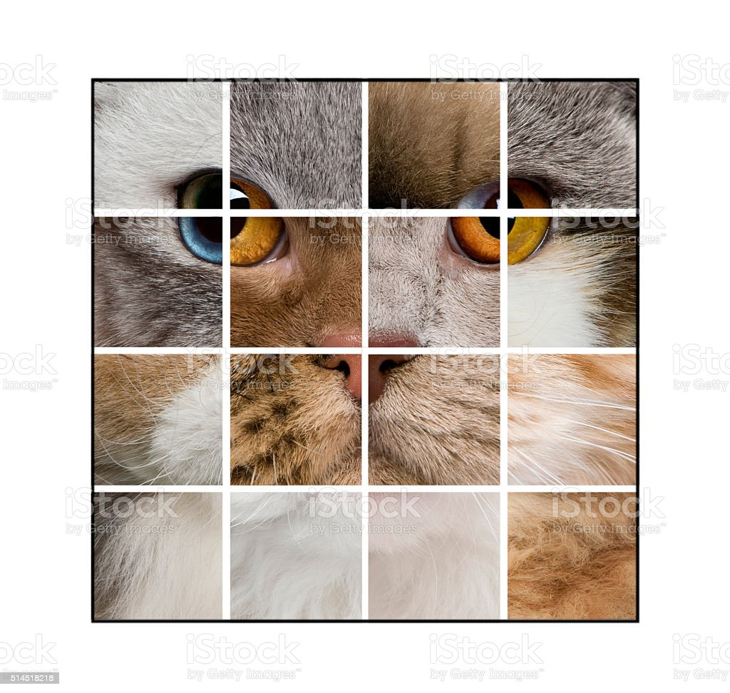 Photo composition of a cat's head made with various cats, stock photo