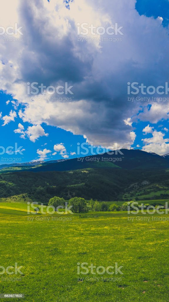 Photo depicting a beautiful colorful amazing mountain meadow paradise landscape, summertime. stock photo