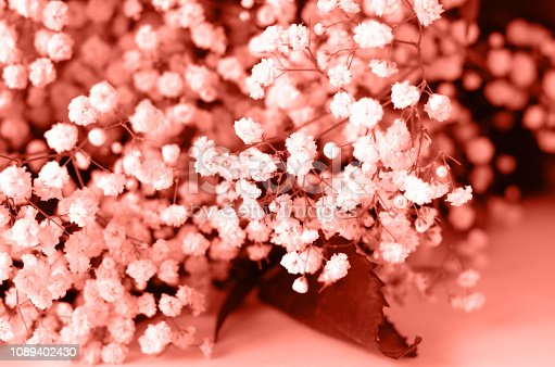 1147995495 istock photo Photo in the color of the year 2019 coral color. 1089402430