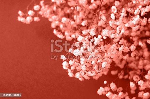 1147995495 istock photo Photo in the color of the year 2019 coral color. 1089404686