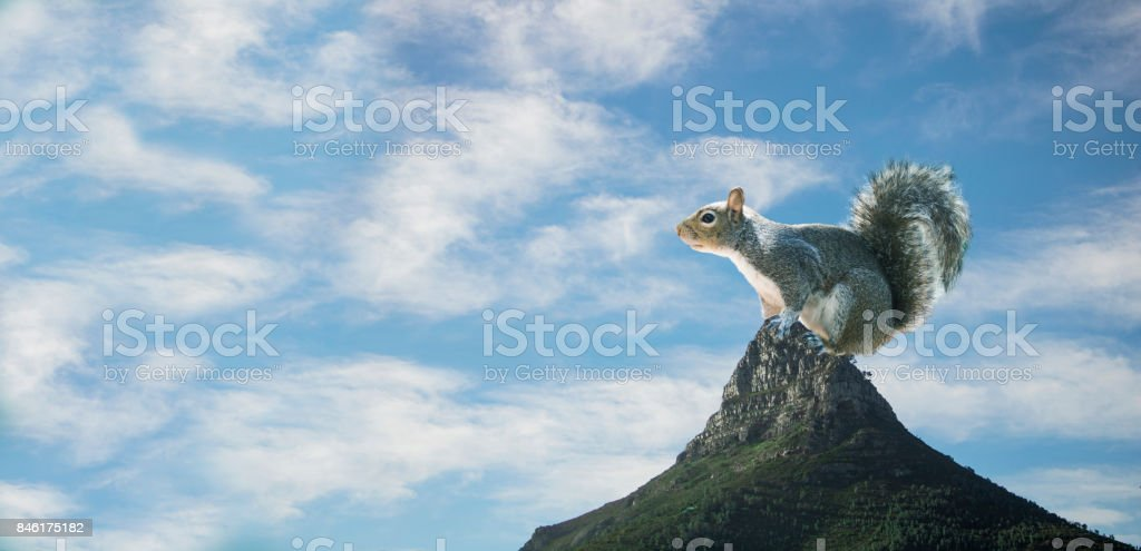 Photo manipulated image of a squirrel sitting on Lion's Head, Cape Town stock photo
