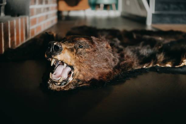photo of a bear rug on the floor stock photo