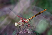 Photo of a beautiful dragonfly in nature. Beautiful wild flowers and green grass. Peaceful landscape. Summer. Beauty of nature. Bright color images . Macrophotography of nature. Amazing and fabulous images of nature.
