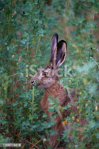 Photo of a beautiful hare in nature. Beautiful wild flowers and green grass. Peaceful landscape. Summer. Beauty of nature. Bright color images. Animals in nature. Amazing and fabulous images of nature.