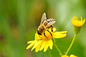 Photo of a bee in nature. Beautiful wild flowers and green grass. Peaceful landscape. Summer. The beauty in nature. Bright color images. Macro photography of nature. Amazing and fabulous images of nature.